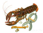 AMERICAN LOBSTER FISHERY