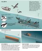 GILLNET SEABIRD BYCATCH: This infographic shows the gillnet fishery's threat to common murre and magellanic penguin seabirds. This scientific animal graphic was drawn in Adobe Illustrator for Smithsonian Magazine Online News