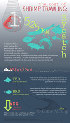 SHRIMP TRAWLING BYCATCH: This infographic shows the cost of shrimp trawling and soultions of TED and BRDs to reduce bycatch with typography and vector drawings. This data graphic was created in Adobe Illustrator